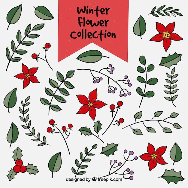 Gran colección de invierno de hojas y flores | Descargar Vectores gratis