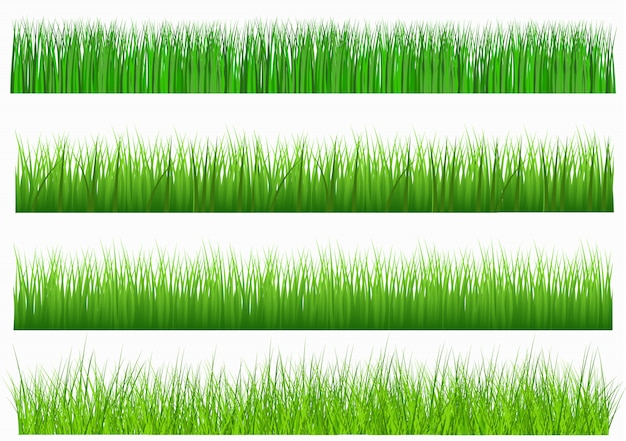 Gran conjunto de hierba verde fresca en longitudes y densidades para su uso como elementos de diseño aislados sobre fondo blanco. Vector Premium