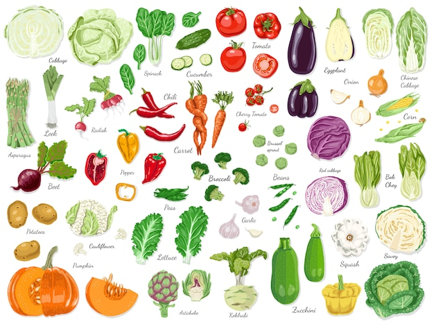 Gran conjunto de verduras de colores. Vector Premium