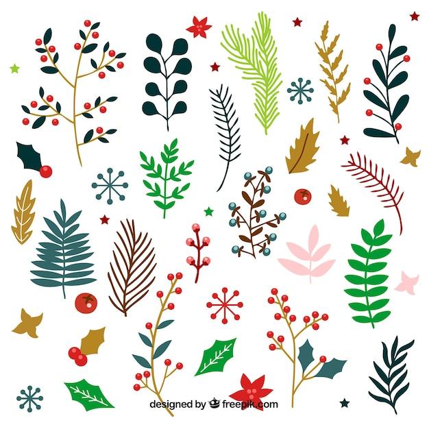 Grande colección de flores y hojas de invierno | Descargar Vectores ...