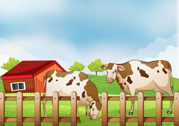 Una granja con dos vacas dentro de la cerca. vector gratuito