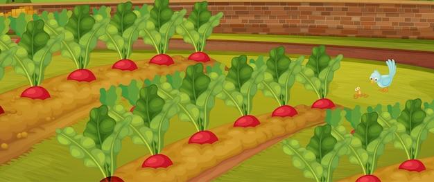 Granja de zanahorias con escena de naturaleza de pajarito vector gratuito