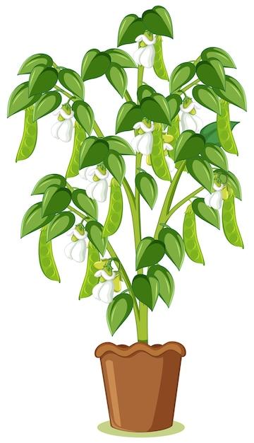 Guisante verde o planta de guisantes en una maceta en estilo de dibujos animados aislado vector gratuito