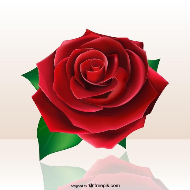 Hermosa Rosa Roja Descargar Vectores Gratis