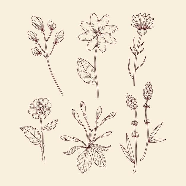 Hierbas botánicas y flores silvestres en estilo vintage vector gratuito
