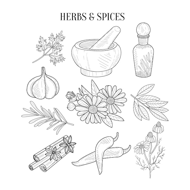 Hierbas y especias aislados bocetos realistas dibujados a mano Vector Premium
