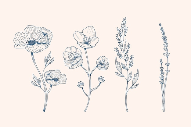 Hierbas realistas dibujadas a mano y flores silvestres vector gratuito