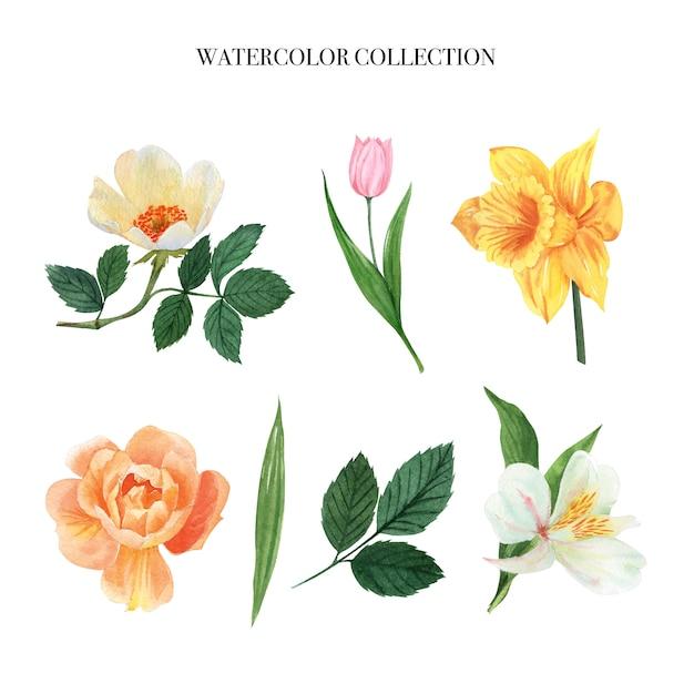 Las hojas y los elementos florales de la acuarela fijaron las flores exuberantes pintadas a mano, ilustración de la flor. vector gratuito