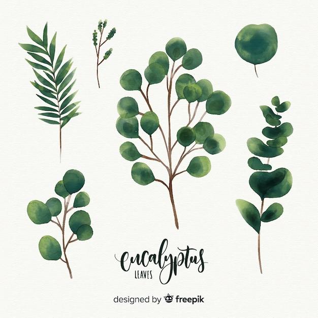 Hojas de eucalipto en acuarela vector gratuito