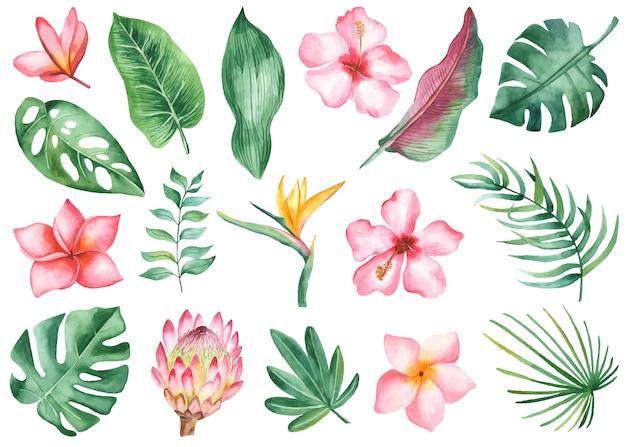 Hojas y flores tropicales Vector Premium