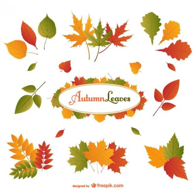 Hojas de oto o paquete de vectores descargar vectores gratis - Descargar autumn leaves ...