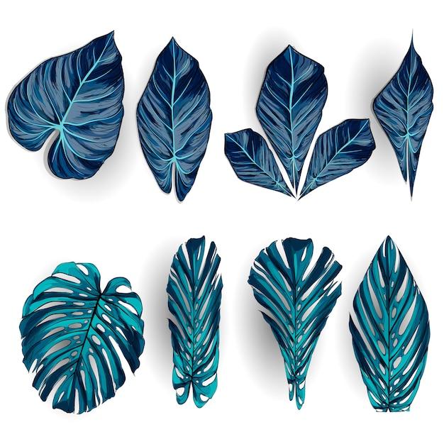 Hojas tropicales exóticas, conjunto de follaje de selva aislado sobre fondo blanco. Vector Premium