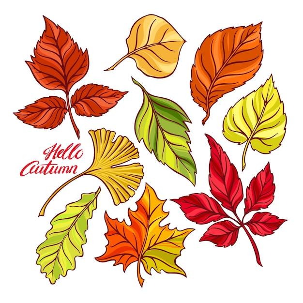 Hola otoño. hermoso conjunto de hojas de otoño. ilustración dibujada a mano Vector Premium