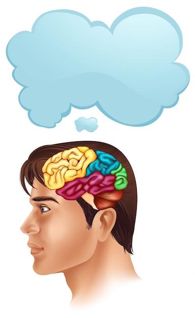 Hombre con diagrama de cerebro y bocadillo | Descargar Vectores Premium