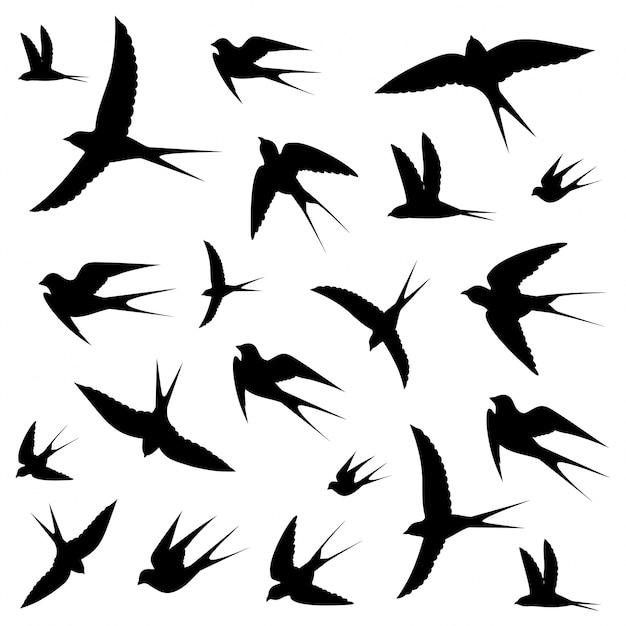 Iconos de pájaros Vector Premium