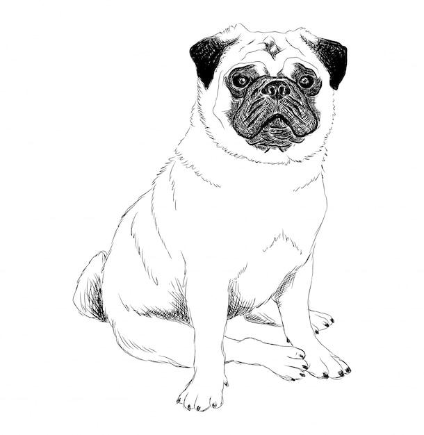 Ilustración En Blanco Y Negro De Un Perro Pug Vector Premium
