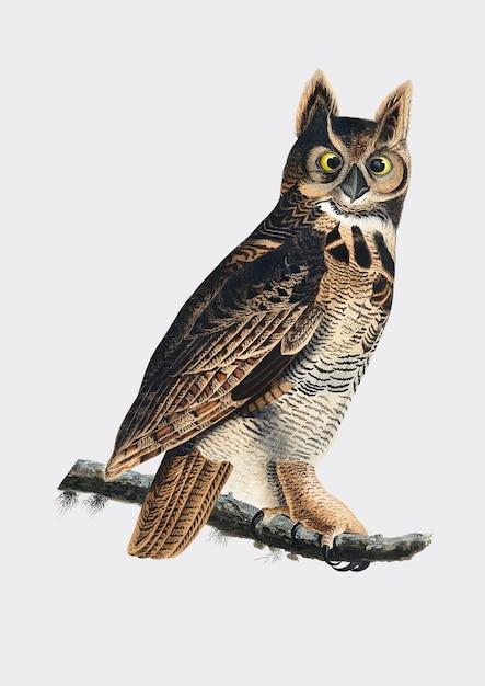 Owl ilustraciones buho t Owl Ilustraciones y Lechuzas