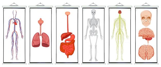 Ilustración de diagramas de sistemas humanos | Descargar Vectores ...