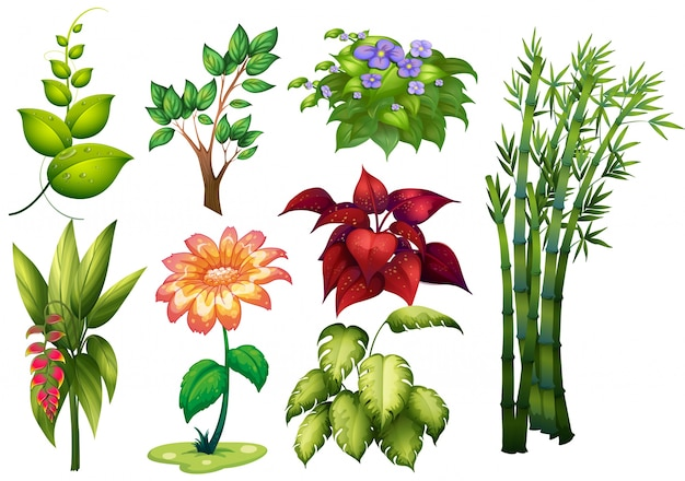 Ilustraci N De Diferentes Tipos De Plantas Y Flores