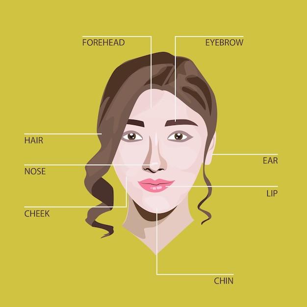 Ilustración de la anatomía del rostro   Descargar Vectores Premium