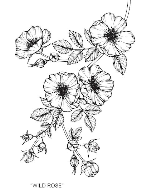 Ilustración de dibujo de flor rosa. Vector Premium