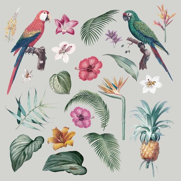 Ilustración de follaje de guacamayo vector gratuito