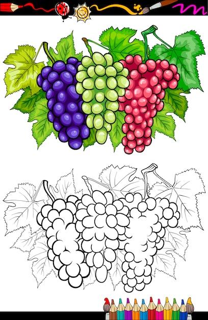 Ilustración De Frutas De Uvas Para Colorear Libro Vector