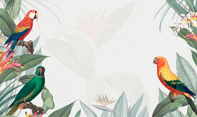 Ilustración de maqueta tropical de guacamayo vector gratuito