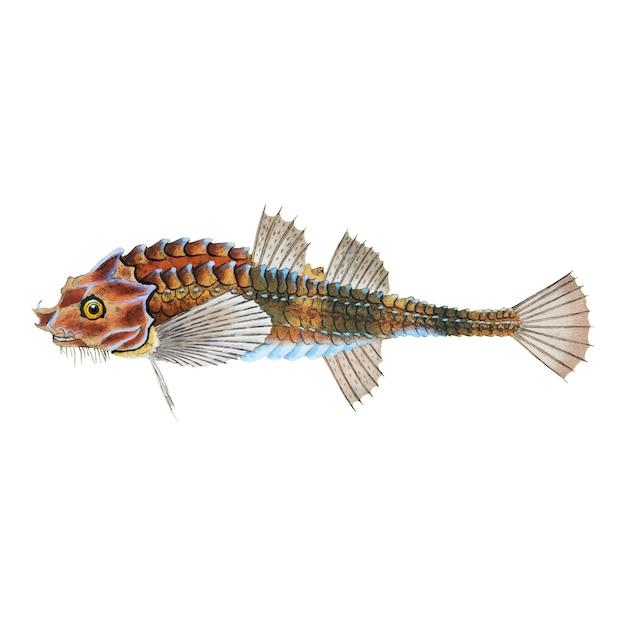 Ilustración de pescado de la vendimia vector gratuito