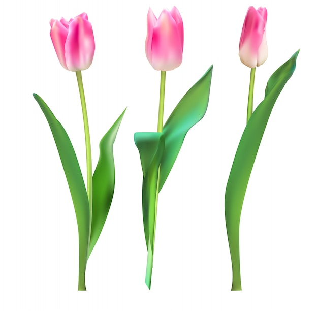 Ilustración realista fondo coloridos tulipanes Vector Premium