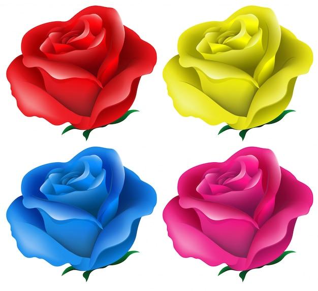 Ilustración De Las Rosas De Colores Sobre Un Fondo Blanco