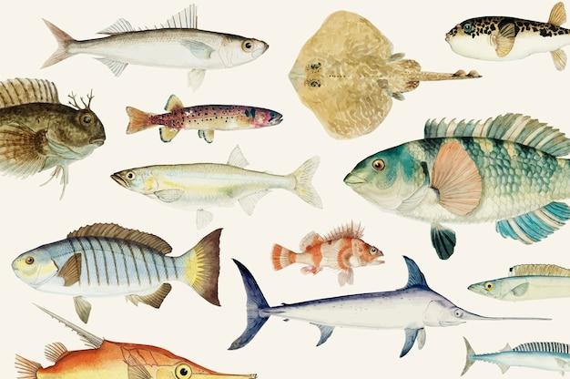 Ilustración de vector coloreado de la colección de dibujo de peces vector gratuito