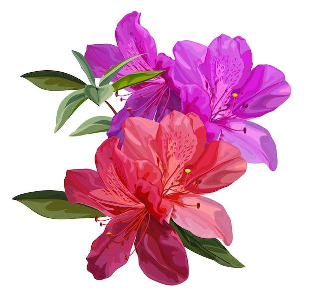 Resultado de imagen para flor de azalea
