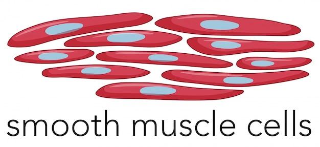 Imagen de células musculares lisas | Descargar Vectores Premium