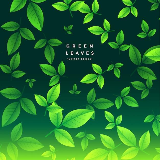 Impresionante fondo de hojas de té verde vector gratuito