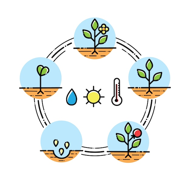 Infografía de etapas de crecimiento de la planta siembra de frutas, proceso de verduras. estilo plano Vector Premium