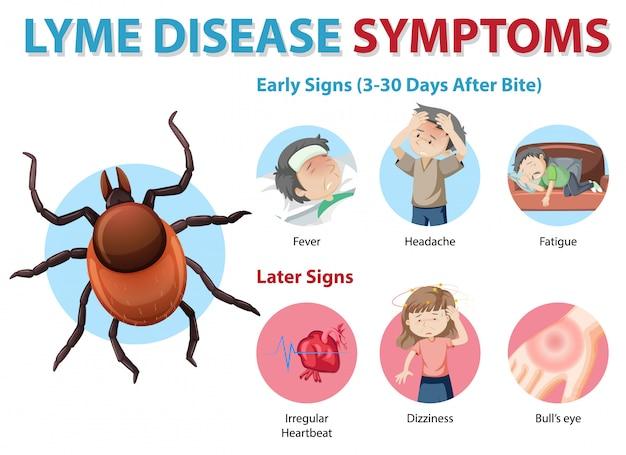 Infografía de información de síntomas de la enfermedad de lyme vector gratuito