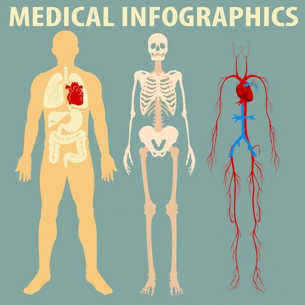 Infografía médica del cuerpo humano vector gratuito