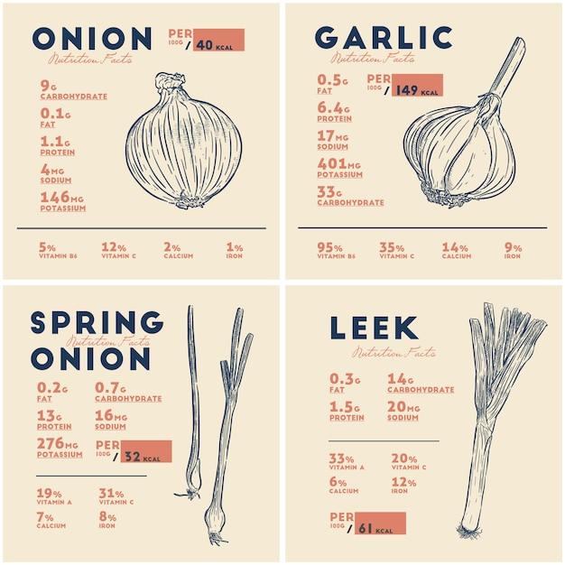 Información nutricional de cebolla, ajo, cebolleta y puerro. bulbos vegetales, dibujo a mano alzada Vector Premium