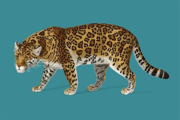 Jaguar (panthera onca) ilustrado vector gratuito