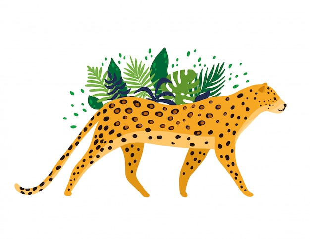 Leopardo aislado en fondo blanco Vector Premium