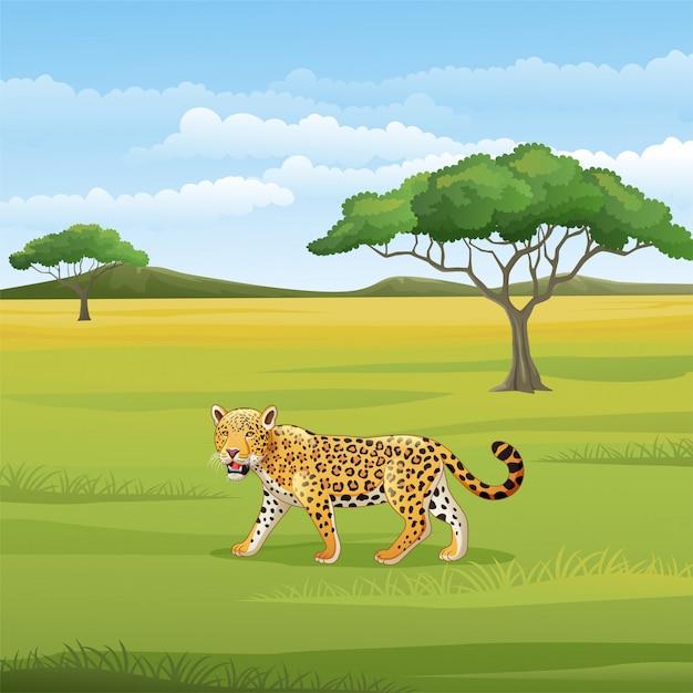 Leopardo de dibujos animados en la sabana Vector Premium