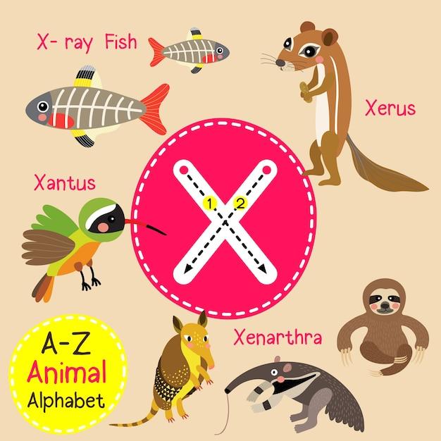 Letra X Alfabeto Zoológico Vector Premium