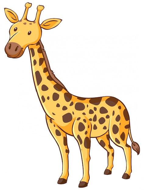 Linda jirafa de pie sobre fondo blanco vector gratuito