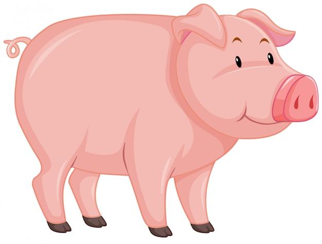 Lindo cerdo con piel rosa sobre blanco vector gratuito