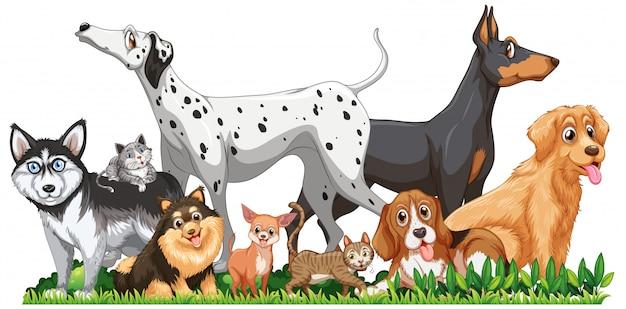 Lindo grupo de perros diferentes vector gratuito
