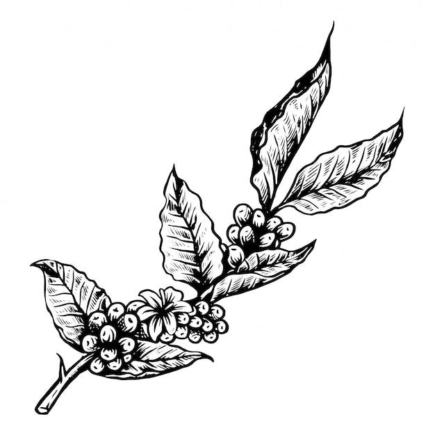 Logo de coffe tree Vector Premium