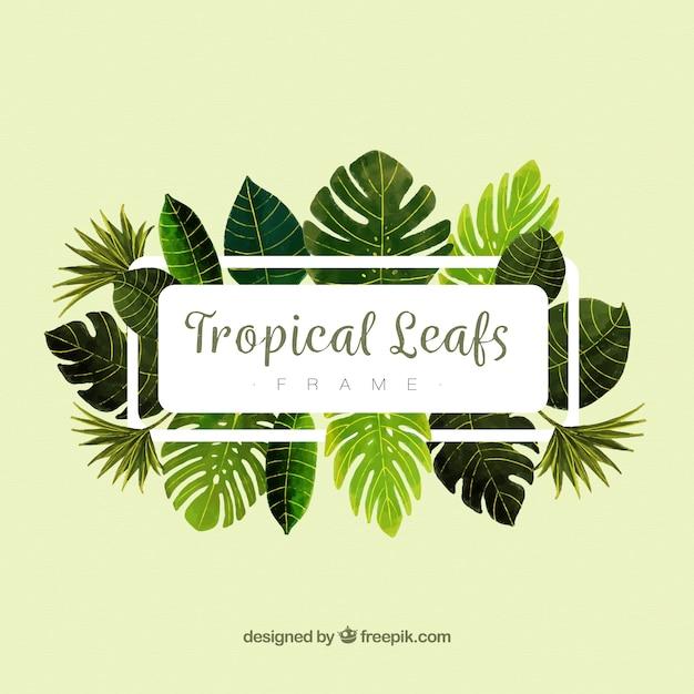 Marco de hojas con plantas tropicales descargar vectores gratis - Marcos para plantas ...