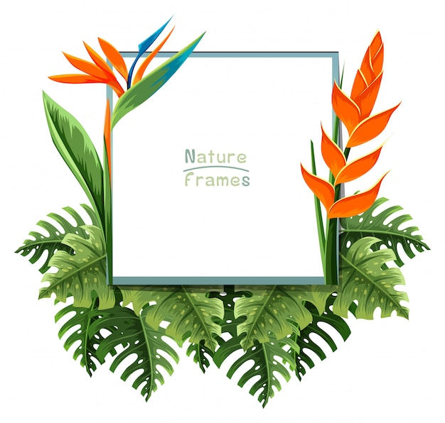 Marco de naturaleza con flor de ave del paraíso   Descargar Vectores ...