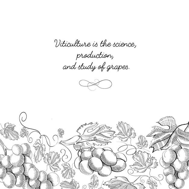 Marco decorativo adorno de desplazamiento vertical uva borde foliado ilustración de boceto dibujado a mano vector gratuito